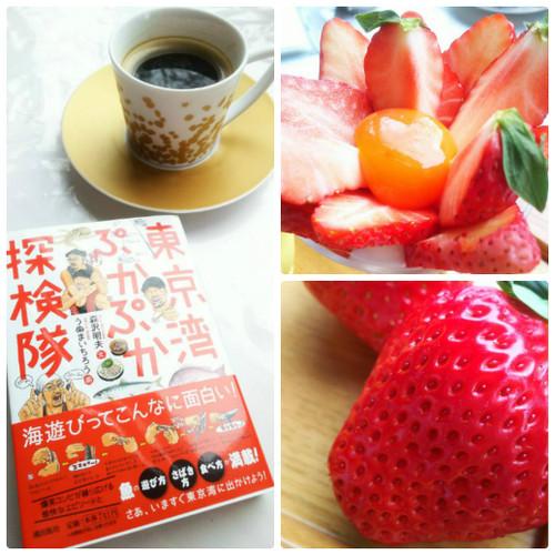 Collage_photocat_2
