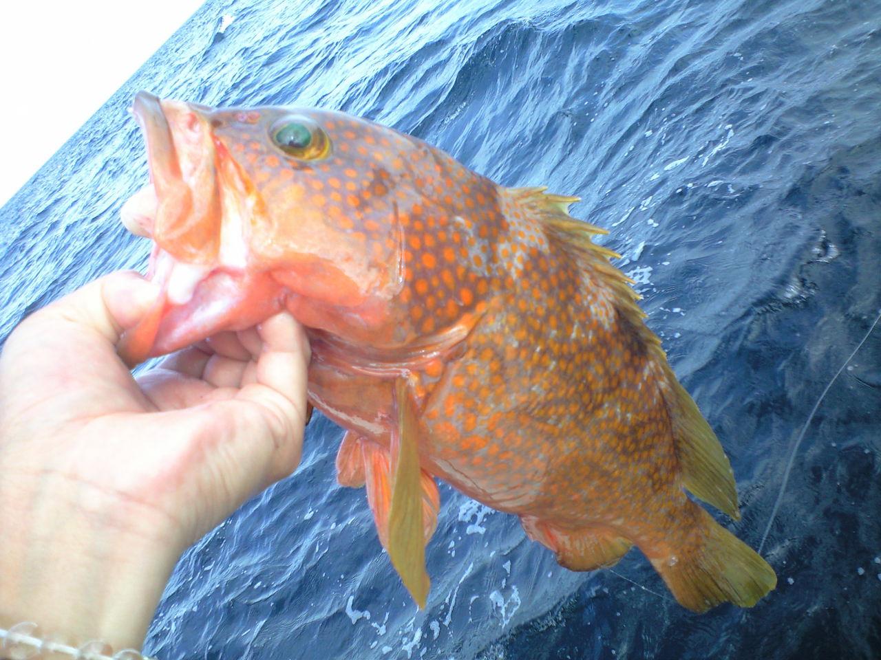 九州遠征釣行 秋の陣